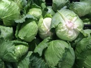 cabbage-1663179_1920