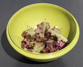 salad-959061_1280.jpg