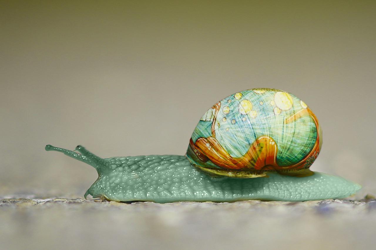 snail-2013317_1280