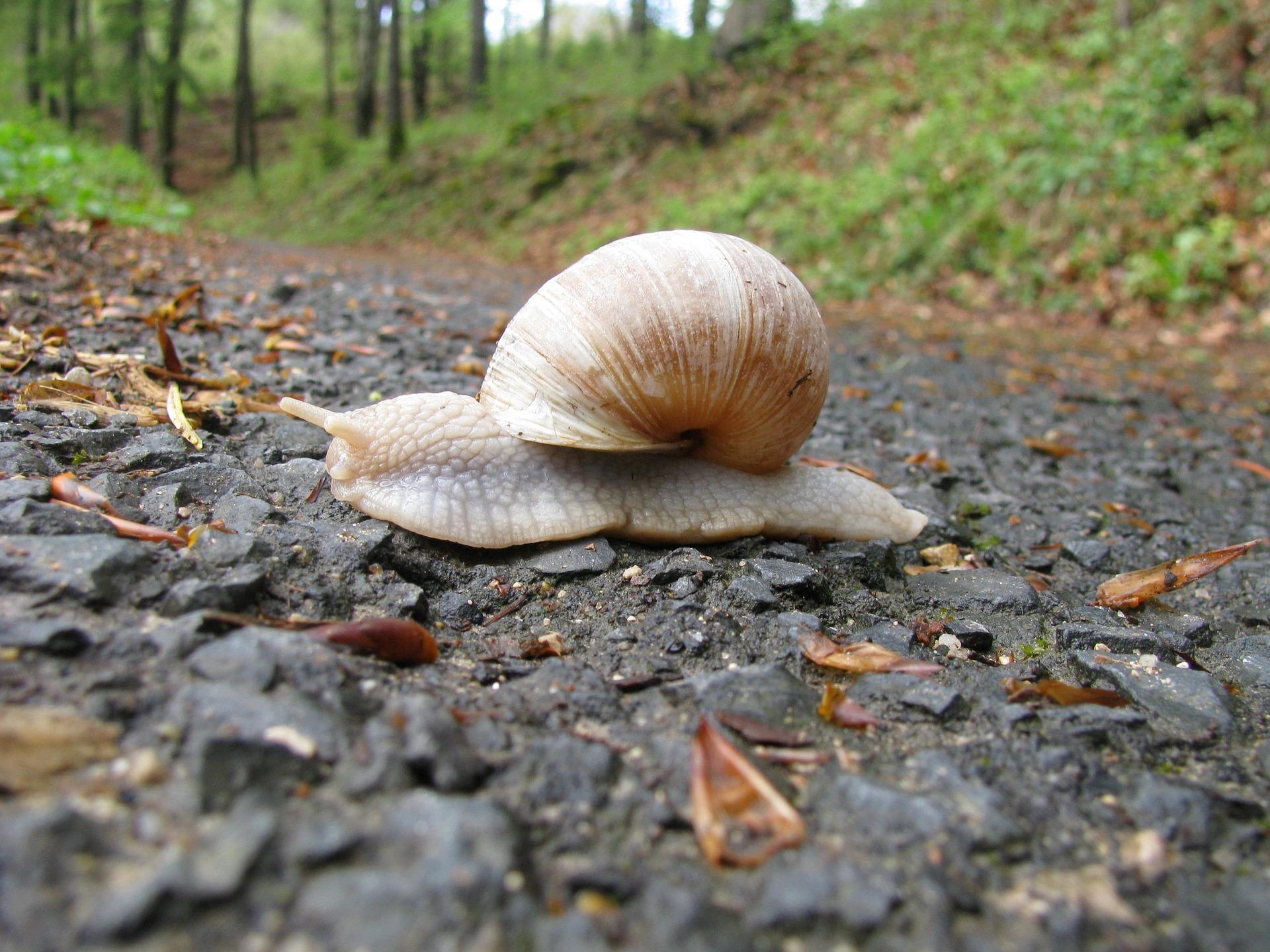 snail-2164278_1920