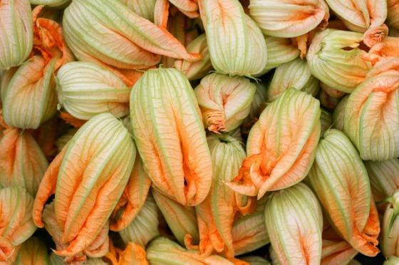 petals-of-zucchini-2349445_640.jpg